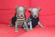Animal lovers have raised nearly £15,000 for two abandoned puppies that were left covered in chemicals in a Bootle park.