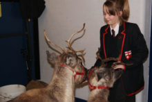 Pupils at a Wirral School welcomed some special visitors when two reindeer arrived to spread some Christmas cheer.