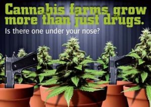 Scratch and Sniff: New campaign targeting Cannabis farms in the UK