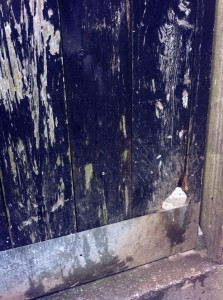 Rats have chewed away at this alleyway door on Saxony Road