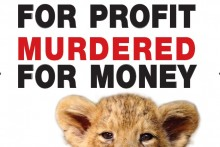 A Global March for Lions is coming to Liverpool this weekend, to highlight the plight of lions in the canned hunting industry.