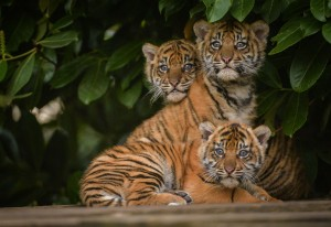 Chester Zoo is home to a vast array of animals which attracted over a million visitors last year. © Chester Zoo