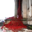 The much-anticipated 'Weeping Window' poppies display opened to the public at St George's Hall.