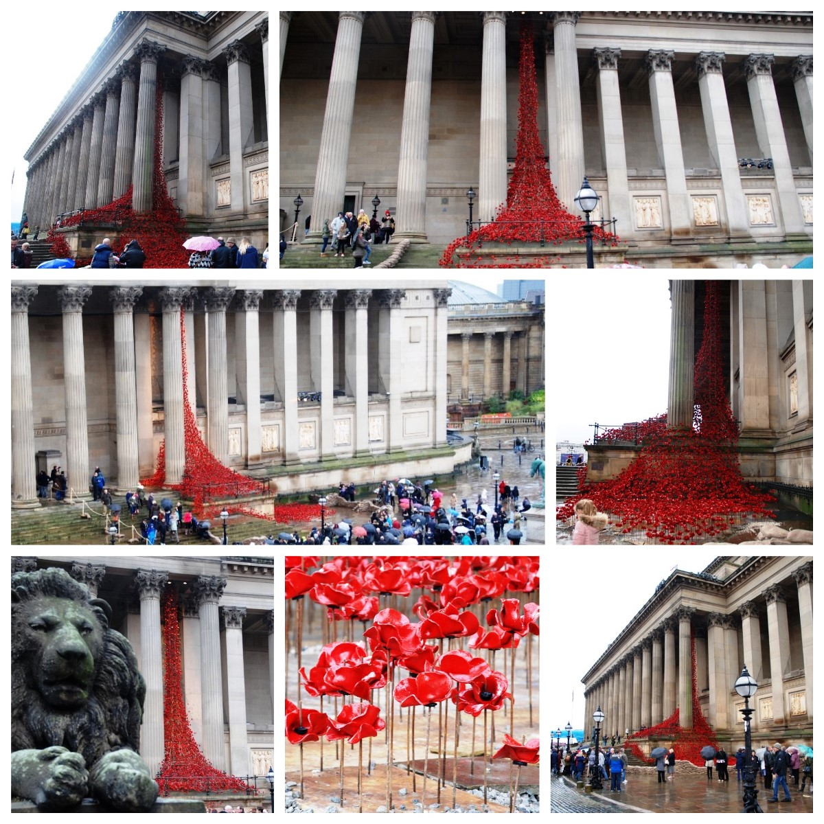 'Weeping Window' poppies display in Liverpool. Pics by Ryan Jones © JMU Journalism