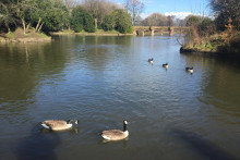 Stanley Park has launched a campaign to stop people from using bread to feed its ducks and geese.