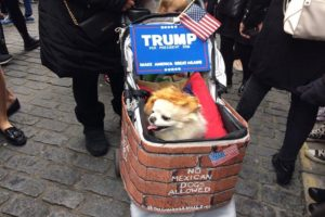 Dog dressed as Donald Trump. Pic by Nicole Quinn © JMU Journalism