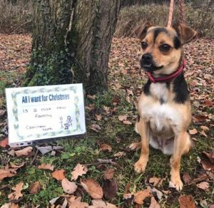 CashChew Nuts will spend her Christmas at Merseyside Dogs Home Pic © Facebook/Merseyside Dogs Home
