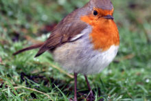 Locals have been busy examining their trees, bushes and lawns this weekend as part of the annual Big Garden Birdwatch.