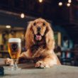 A craft brewery firm will offer its staff paid 'pawternity' leave of up to seven days to look after a new dog.