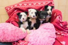 Four dogs that were all given love-themed names have found new owners for Valentine's Day.