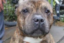 A petition to save a Staffordshire Bull Terrier discovered eating his deceased owner has received more than 35,000 signatures.