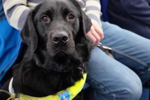 Pic © Guide Dogs Liverpool/Facebook