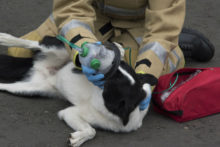 Pet-friendly oxygen masks are the newest addition to the kit of Merseyside Fire & Rescue teams.