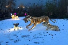 An enchanted wonderland has opened at Chester Zoo just in time for Christmas.