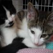 A Merseyside animal charity has been nominated to win £1,000 to helpsupport its growing business.