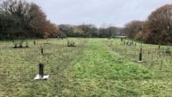 Wirral Council planted more than 900 trees in Birkenhead during National Tree Week to help tackle climate change.