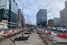 The first of 150 trees have been planted on The Strand to help surface drainage on one of the city's busiest roads.