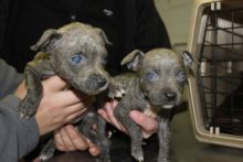 Two abandoned puppies have been found in a Merseyside park, after having been doused in a chemical.
