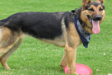 A Merseyside canine charity is experimenting with a scheme where owners 'blind date' a potential pet.