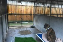 More dogs across Merseyside are being found dumped and neglected due to the desire for new puppies for Christmas.